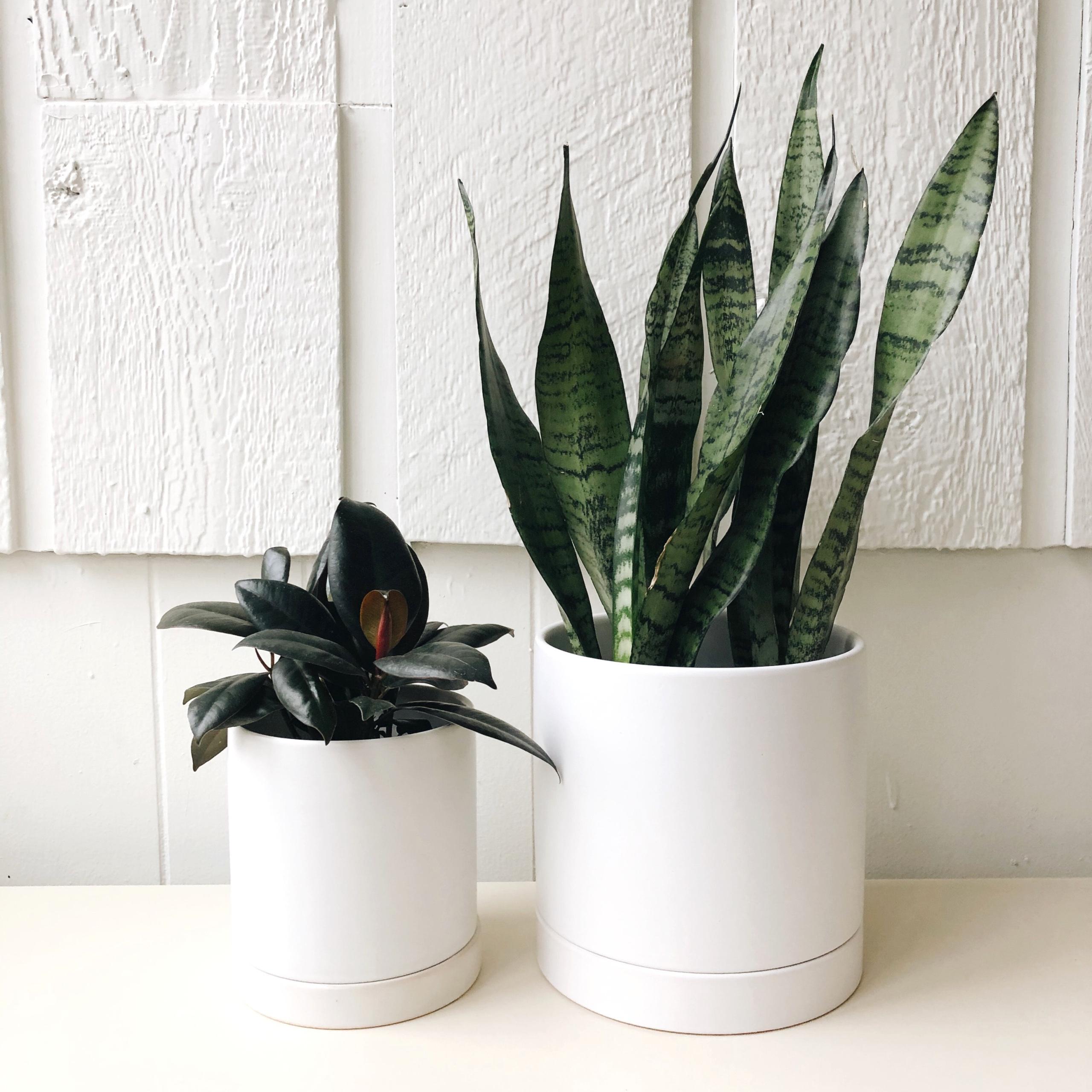 White Ceramic Planter Saucer By Plantstand Carousel Folk